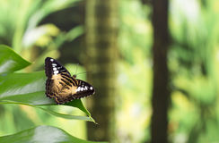 Портрет бабочки в реальном маштабе времени Стоковые Изображения RF