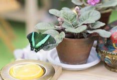 Портрет бабочки в реальном маштабе времени Стоковые Фото