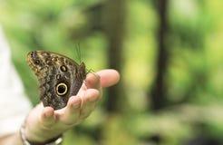 Портрет бабочки в реальном маштабе времени Стоковое Изображение RF