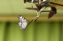Портрет бабочки в реальном маштабе времени Стоковое Изображение