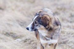 Портрет бездомной собаки внешней Стоковое Фото