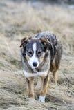 Портрет бездомной собаки внешней Стоковые Фотографии RF