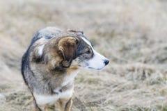Портрет бездомной собаки внешней Стоковое Изображение RF