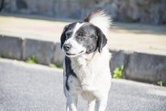 Портрет бездомной собаки на дороге Стоковая Фотография