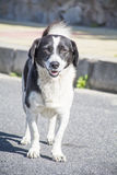 Портрет бездомной собаки на дороге стоковые фотографии rf