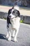 Портрет бездомной собаки на дороге стоковые фото