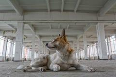 Портрет бездомной собаки Стоковые Фотографии RF