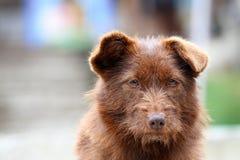 Портрет бездомной собаки Стоковое Изображение