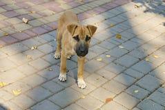 Портрет бездомной собаки outdoors Стоковое Изображение