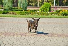 Портрет бездомной собаки outdoors Стоковая Фотография RF