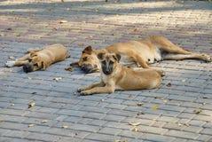 Портрет бездомной собаки outdoors Стоковые Изображения RF