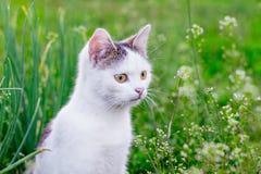 Портрет белого кота против предпосылки зеленой травы в garden_ стоковая фотография rf