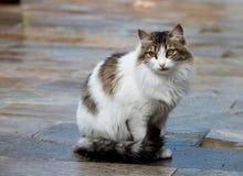 Портрет белого кота Стоковые Изображения
