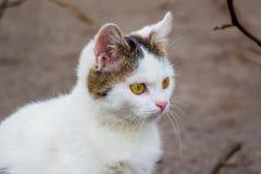 Портрет белого молодого кота в nature_ стоковые фото