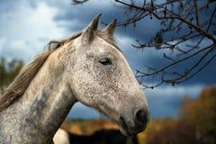 Портрет белой лошади стоковые фото