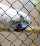 Портрет белого попугая в клетке Стоковое Изображение RF