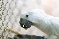 Портрет белого попугая в клетке Стоковые Изображения RF