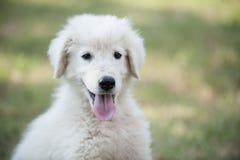 Портрет белого щенка Стоковое Изображение