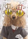 Портрет бизнес-партнера Стоковое фото RF