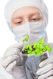 Портрет биолога с ростками в стекле Стоковая Фотография