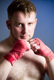 портрет боксера Стоковое фото RF
