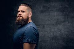 Портрет бородатого мужчины на серой предпосылке виньетки Стоковые Фото