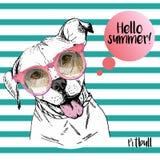 Портрет вектора близкий поднимающий вверх английского pitbull нося sunglassess Здравствуйте! лето Стоковое Изображение RF