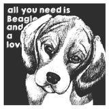 Портрет вектора близкий поднимающий вверх бигля, на предпосылке черного квадрата Все вам влюбленность и собака Стоковое фото RF