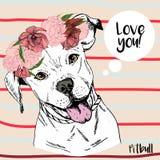 Портрет вектора близкий поднимающий вверх девушки pitbull, нося венок цветка Нарисованная рукой отечественная иллюстрация собаки Стоковые Изображения RF