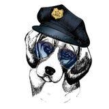 Портрет вектора близкий поднимающий вверх полицейской собаки Бигль нося пиковую крышку и солнечные очки Стоковая Фотография