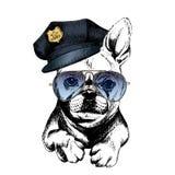 Портрет вектора близкий поднимающий вверх полицейской собаки Французский бульдог нося пиковую крышку и солнечные очки Стоковая Фотография RF