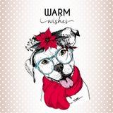 Портрет вектора собаки рождества Венок, солнечные очки и шарф poinsettia английской собаки pitbull нося иллюстрация штока
