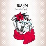 Портрет вектора собаки рождества Венок, солнечные очки и шарф poinsettia собаки retriever Лабрадора нося иллюстрация штока