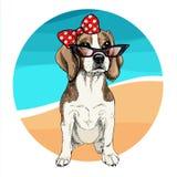 Портрет вектора солнечных очков собаки бигля нося и ретро смычка Иллюстрация моды лета Каникулы, море, пляж, океан Стоковое Изображение RF