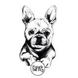 Портрет вектора французского бульдога Нарисованная рукой отечественная иллюстрация собаки Стоковая Фотография RF