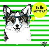 Портрет вектора corgi нося sunglassess Здравствуйте! лето Нарисованная рукой иллюстрация собаки на зеленых прокладках Стоковые Изображения