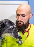 Портрет ветеринара и борзой стоковые изображения rf