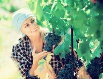Портрет взрослого женского работника на ферме виноградины стоковое фото