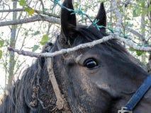 Портрет Глаз лошади Стоковое Изображение RF
