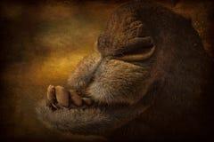 Портрет головы верблюда в Pushkar Стоковое Изображение RF