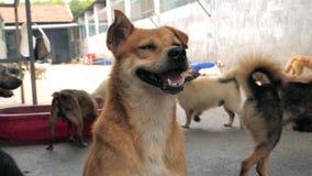 Портрет грустной смешанной собаки породы в укрытии или животном питомнике Укрытие для концепции животных сток-видео