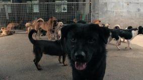Портрет грустной смешанной собаки породы в укрытии или животном питомнике Укрытие для концепции животных акции видеоматериалы