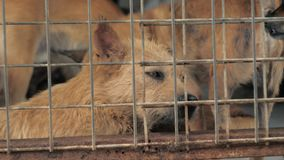 Портрет грустной смешанной собаки породы за загородками Собака в укрытии или животном питомнике Укрытие для концепции животных видеоматериал