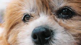 Портрет грустной собаки в укрытии ждать быть спасенным и принятым к новому дому Укрытие для концепции животных видеоматериал