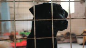 Портрет грустной собаки в укрытии за загородкой ждать быть спасенным и принятым к новому дому Укрытие для концепции животных сток-видео