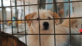 Портрет грустной собаки в укрытии за загородкой ждать быть спасенным и принятым к новому дому Укрытие для концепции животных акции видеоматериалы