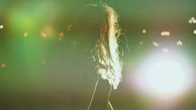 Портрет девушки в силуэте с волосами развевая в предпосылке города ветерка вечером Светлые волосы в светах города пожар сток-видео