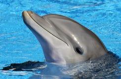 Портрет дельфина стоковые изображения rf