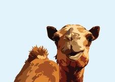 Портрет дизайна искусства вектора верблюда бесплатная иллюстрация