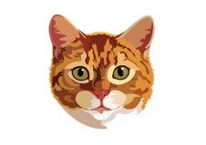Портрет дизайна искусства вектора кота следуя иллюстрация штока